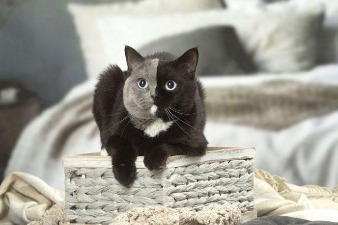 Двуликий котенок вырос настоящим красавцем