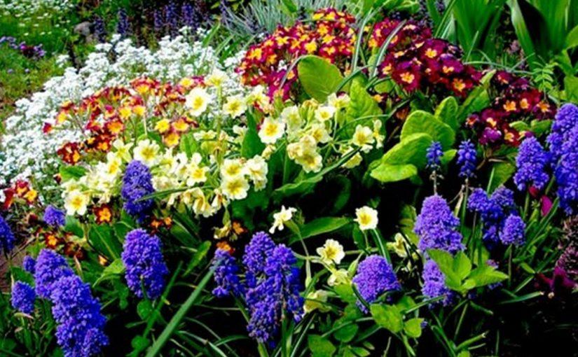 Неприхотливые многолетники для сада: когда уход сведен к минимуму