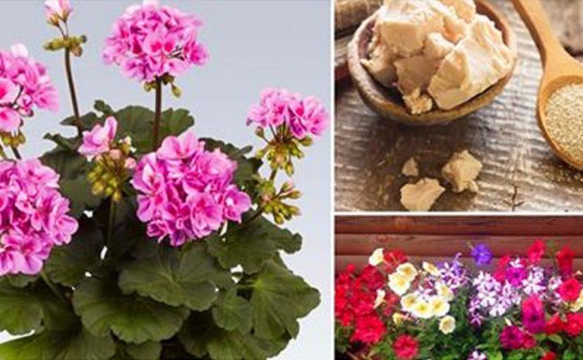 9 лучших подкормок для комнатных цветов