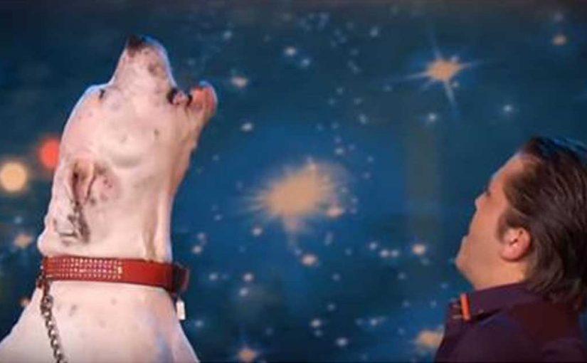 Собака вышла на сцену и спела хит Уитни Хьюстон.