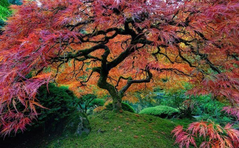 Самые красивые деревья мира