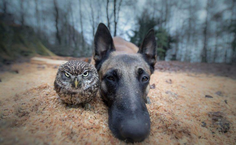 30+ фотографий пса и его подруги-совы