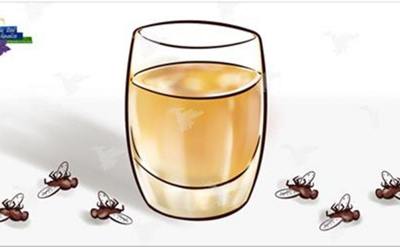 Домашний спрей против мух, комаров и тараканов
