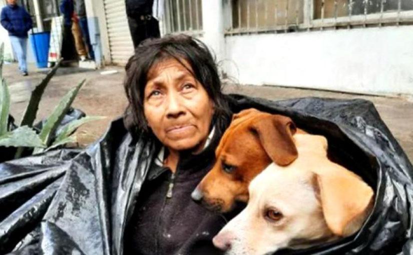 Бездомна жінка відмовилася залишати вулицю, щоб не кидати собак